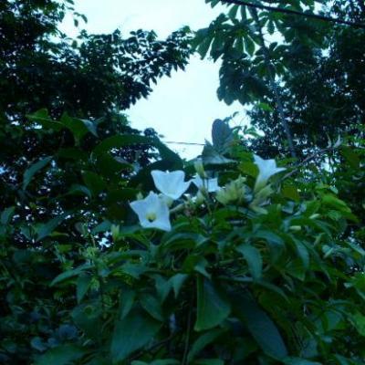 Guyane 2ème série