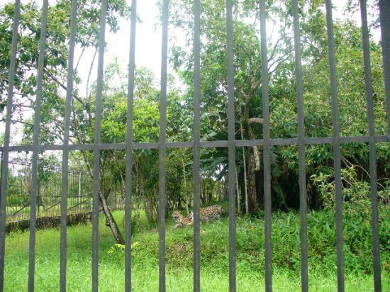 Animaux de Guyane