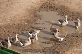 Troupe de canes